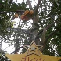 """""""アルプスの青い星""""が咲く植物園"""