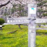 海津大崎 4月9日(日)小雨 桜はまだ、これから