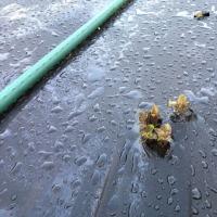 霜と鳥のダブルパンチを喰らいました (@_@;)