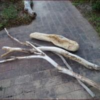 ハイビスカスと正ちゃんと流木