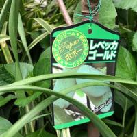 庭の花たち 1 レベッカ・ゴールド