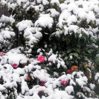 午後から霙 夕方から雪