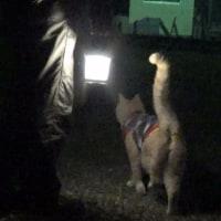 夜のキャンプ場を♂猫だいずと散歩🎵