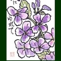大根の花(緒喝采)