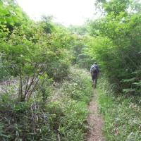 マッキーの山登り:今年のわらび採り