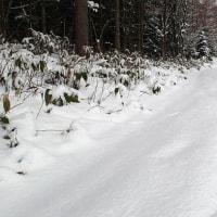 疲れにくい雪かき法