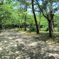 木漏れ日づくしの公園
