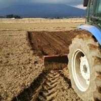 発地黒大豆畑