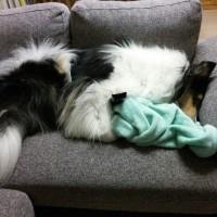 リモコンを抱えて寝る子