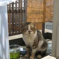 老猫 寅吉ありがとう 冥福を祈ります