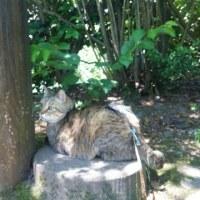 松の木でバリバリ