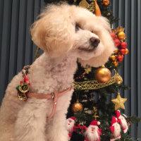 ソフィー&ウインキー家はクリスマスツリーを飾りました・・・早速、撮影会をしました。