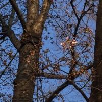 春本番。あちこち写真撮りまくり。