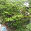 清流、日本酒 ガーデン澤乃井園