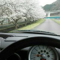 ちょうど桜が満開でした ヽ(=´▽`=)ノ