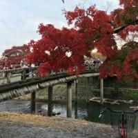 京都 オモロッソ紅葉サイクリング