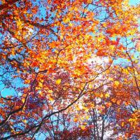 至仏山の紅葉