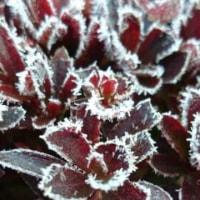 霜の花のよう・・・♪