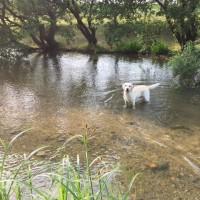 梅雨 でも雨は降りません・・・  ~今年最初の川遊び~