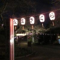 2017年「第65回衣笠さくら祭」衣笠山公園に雪洞点灯