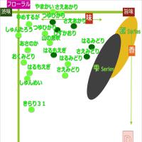320煎 マイ茶ート 品種版 更新 Ver3 Dゾーン