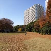 日清ドリームテニス有明2016 若い日本に期待!
