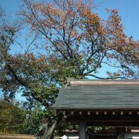 見沼代用水(55)・満蔵寺