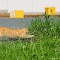 最新のホバリング仕様のネコ @相島のネコたち