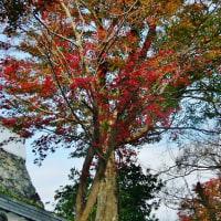 秋の終わりの福知山城