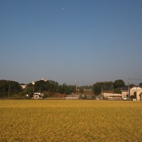 秋の風景。稲穂や田舎の景色。