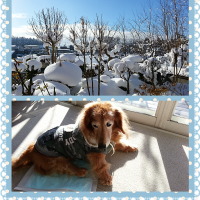 今季最強の大雪が去って…