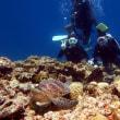 なんかいい感じ!沖縄ダイビング 那覇シーマリン