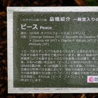 いわみざ公園 バラ園