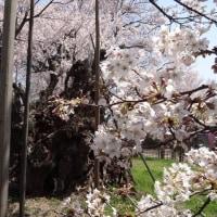 山高古代桜、実相寺と甲斐駒ケ岳