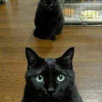 猫いない生活最後の夜 (ΦωΦ)