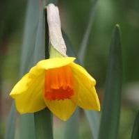 庭先に咲く春の花