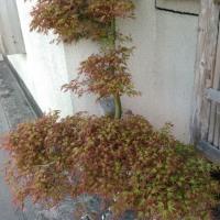 新緑の季節\(^^)/
