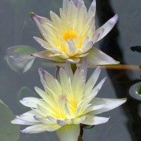 咲くやこの花館 (2)