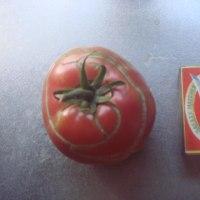 久々の更新 3年目のトマト