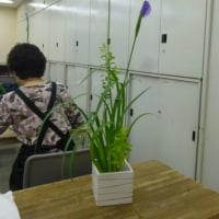 いけ花教室(花菖蒲をいける)