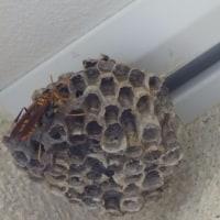 蜂が死んだ!!