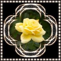 フラワーパーク 薔薇の花。