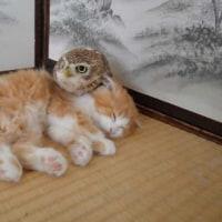 猫とフクロウが寄り合う幸せ空間