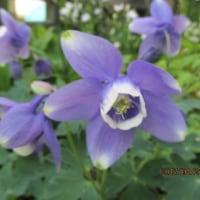 庭に咲く春の花17・・2