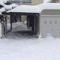 札幌は今のところ雪は少なめです