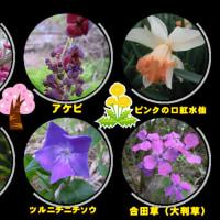 4月17日・曇り今日の花