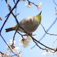 ようやく「花と鳥」の季節到来
