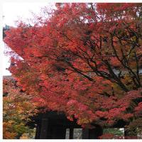 京都 2016 秋 8