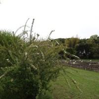 4月22日 活動報告 ④ 草刈り