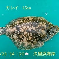 笑転爺の釣行記 2月23日☂☁ 久里浜海岸